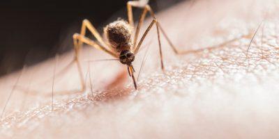 Parasitenbekämpfung – Schützen Sie Ihr Eigentum und Ihren Wohnsitz